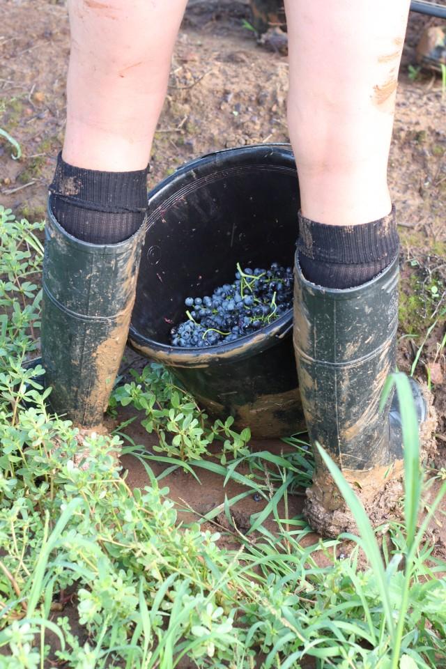 brokenwood-boots-cellarmaster-wines